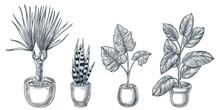Home Plants In Pots. Vector Ha...