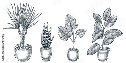 Valokuva Home plants in pots