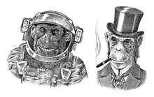Monkey Astronaut And Gentleman...