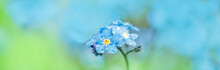Long Banner Forget Me Not.forget-me-not Macro. Violet Blue Blur Background. Summer Spring Card.