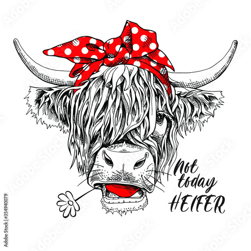 Photo Cute cow (Hairy Coo) in a red polka dot bow headband and witn chamomile flower