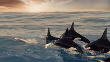 Orcas Are Swimming Middle Of The Ocean Heading To The Sun Breakdown