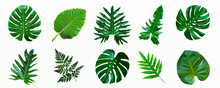 Set Of Green Monstera Palm And...