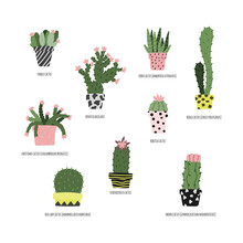 Hand Drawn Set Of House Plants...