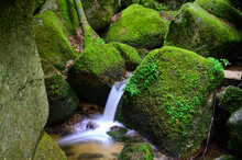 Small Waterfall Surrounded By ...