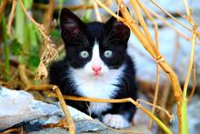 Stray Kitten Sifnos