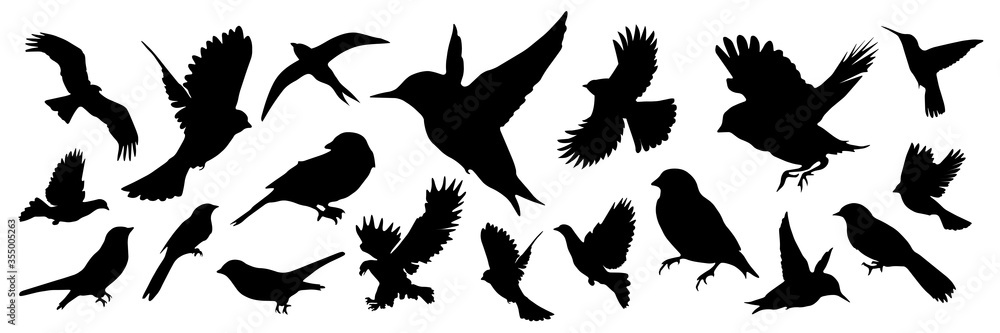 Fototapeta Detailed bird black silhouettes of different kind