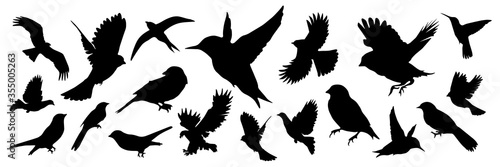 Detailed bird black silhouettes of different kind