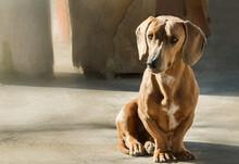 Un Adorable Perro Salchicha Se...