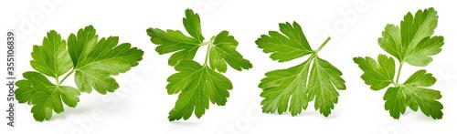 Fototapeta Set of parsley leaves isolated on white. obraz