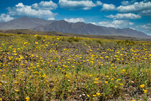 Rare Storm In Death Valley Brings Snow, Wildflowers And A Salt Lake