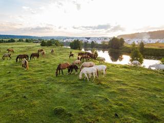 Akhal-Teke horses herds grazes in a meadow in the Tver region. Russia