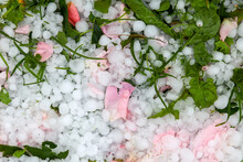 Hailstone On The Grass With Th...