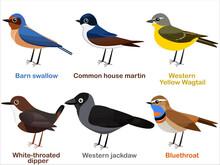 Vector Illustration Set Of Cute European Bird Cartoons - Barn Swallow, House Martin, Yellow Wagtail, White Throated Dipper, Western Jackdaw, Bluethroat