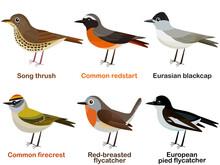 Vector Illustration Set Of Cute European Bird Cartoons - Song Thrush, Common Redstart, Eurasian Blackcap, Common Firecrest, Red-breasted Flycatcher, European Pied Flycatcher