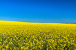 canvas print picture - Field of rapeseed, Western Cape, South Africa