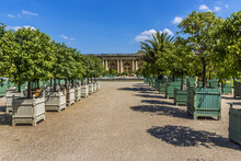 Beautiful Orangerie Parterre (1684 - 1686) In Versailles Palace. It Features 1,055 Trees, Including Palm Trees, Oleanders, Pomegranate And Orange Trees. Versailles, Paris, France.
