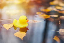 Duck Toy In Autumn Puddle With...