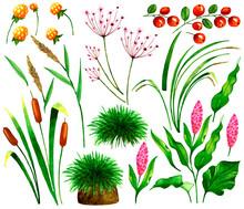Set With Marsh Plants,berries ...
