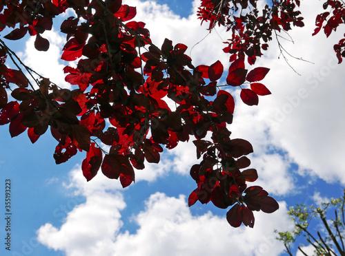 moltitudine di foglie rosse contro il cielo Fototapeta