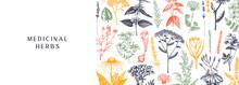 Hand-drawn Medicinal Herbs Ban...