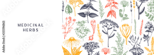 Hand-drawn medicinal herbs banner design in color. Wildflower, weed, and meadow sketches. Vintage summer plants template. Herbs outlines - 355196863
