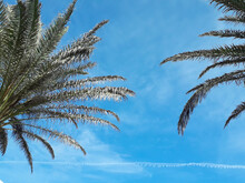 Two Palm Trees Texture With A Blue Sky Background. Minimal Travel Concept, Minimalism