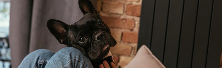 website header of black french bulldog near girl in living room