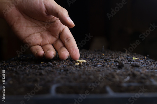Obraz Professional farmer checking a seed after sow in black soil in a pot tray. Vegetable garden and Planting concept. - fototapety do salonu