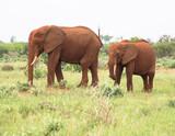 Elephants  of Tsavo National Park