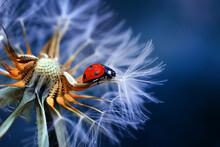 Beautiful Ladybug On Dandelion...