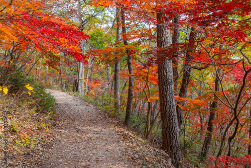 Colorful trees alongside a path at Naejangsan national park in republic of Korea