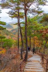 Colorful trees alongside a path at Juwangsan national park in republic of Korea