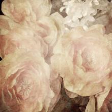 Art Floral Vintage Sepia Backg...