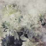 art grunge floral cool sepia vintage paper textured watercolor background with white asters - 355373447