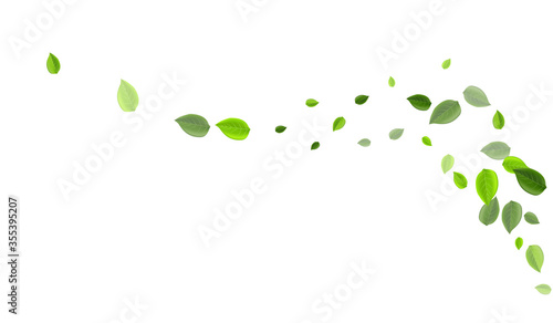 Photo Grassy Leaf Wind Vector Branch. Tea Greens
