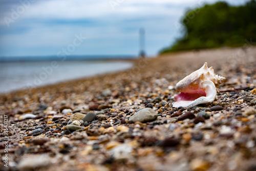 conch on a rocky beach Canvas Print