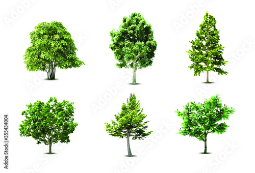 Fototapeta Set of different trees. Beautiful tropical tree collection isolated on white background. Vector illustration. obraz