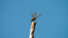 Dragonfly On Blue Sky