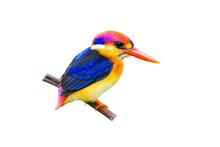 The Oriental Dwarf Kingfisher ...