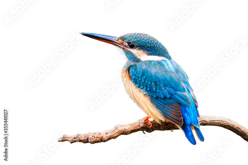 Common Kingfisher (Alcedo atthis) isolate on white background. Fototapet
