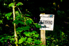 Private Fishing Sign Surrounde...
