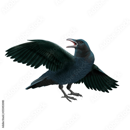 oiseau, , corbeau, volant, aile ouverte, bec ouverte, nature, isolé, faune,  bec, noir, attitude, ailes, sauvage,  ailes,  oiseau, mouche, vol, fond blanc Fotomurales