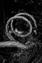 Twisted Tree Root On Black Bac...