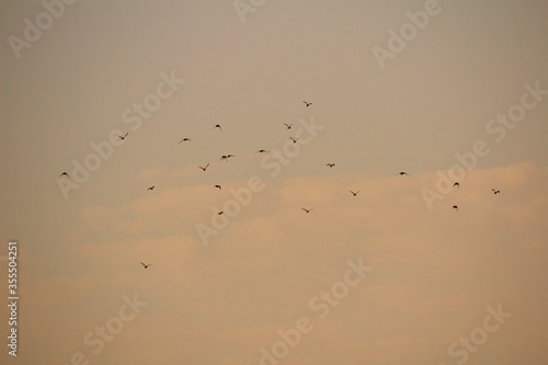 Flock of Birds at the Sunset Canvas Print