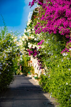 Alley With Entwined Houses In ...