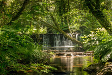 Forest River With Dense Tropic...