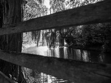 Willow Tree Protrudes Into A River, Black And White, Monochrome, Fence