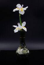 Two White Butterfly Iris Flowers In A Black Vase With Golden Painting And Black Background