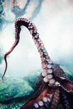 OCTOPUS IN THE SEA..!!